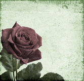 kiedy tło karty zielone ogniska pozdrowienia miłości romanse czerwonego rose symbolu użyteczne walentynki Obrazy Stock