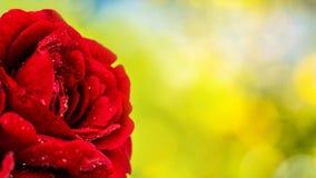 kiedy tło karty zielone ogniska pozdrowienia miłości romanse czerwonego rose symbolu użyteczne walentynki Obraz Royalty Free