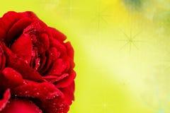 kiedy tło karty zielone ogniska pozdrowienia miłości romanse czerwonego rose symbolu użyteczne walentynki Zdjęcia Royalty Free