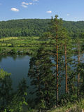 Kiefer über dem Fluss Lizenzfreie Stockbilder