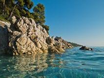 Kiefer über Meer schaukelt über haarscharfes Türkiswasser, Kastani-Mamma Mia-Strand, Insel von Skopelos Stockfotografie