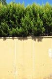 Kiefer Stockbilder