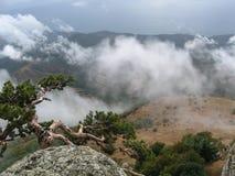 Kiefer auf dem Berg Stockfoto