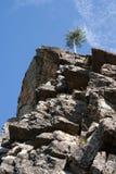 Kiefer auf dem Felsen 1 Lizenzfreie Stockfotografie