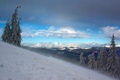 Kiefer auf dem Hügel des Winters sortieren während des sno neu Stockfotografie