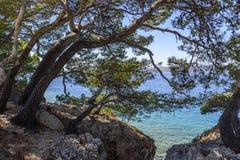 Kiefer auf dem Ufer des blauen Meeres Bild in den Herbstfarben kroatien Lizenzfreie Stockfotos