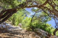 Kiefer auf dem Ufer des blauen Meeres Bild in den Herbstfarben kroatien Lizenzfreies Stockfoto