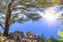 Kiefer auf dem Ufer des blauen Meeres Bild in den Herbstfarben kroatien Lizenzfreie Stockbilder