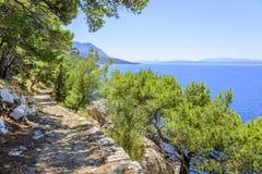 Kiefer auf dem Ufer des blauen Meeres Bild in den Herbstfarben kroatien Lizenzfreie Stockfotografie