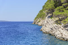 Kiefer auf dem Ufer des blauen Meeres Bild in den Herbstfarben kroatien Stockfotos