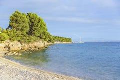 Kiefer auf dem Ufer des blauen Meeres Bild in den Herbstfarben kroatien Stockfoto
