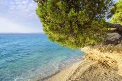 Kiefer auf dem Ufer des blauen Meeres kroatien Lizenzfreie Stockfotografie