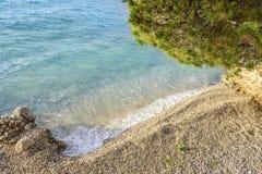 Kiefer auf dem Ufer des blauen Meeres kroatien Lizenzfreies Stockbild