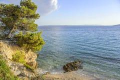 Kiefer auf dem Ufer des blauen Meeres kroatien Stockfoto