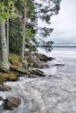 Kiefer auf dem Ufer des Wintersees Lizenzfreie Stockfotos