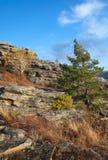 Kiefer auf einem Berghang stockbilder