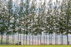 Kiefer auf grünem Gras des Golfplatzes Stockbild