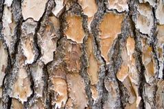 Kiefer-Barke-Hintergrund-Landschaft Lizenzfreie Stockbilder