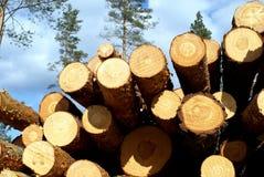 Kiefer-Bauholz im Wald Stockbilder