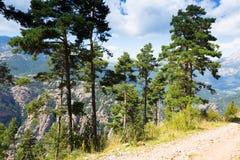 Kiefer an den Bergen gegen Aussicht Stockbilder