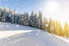 Kiefer in den Bergen und fallender Schnee im Märchenwinter SU Lizenzfreie Stockfotos