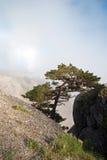 Kiefer in den Felsen gegen weiße Wolken. Wilde Blumen Lizenzfreies Stockfoto