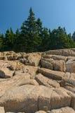 Kiefer, die auf und in den rosa Granitplatten von Felsen L wachsen Stockbild