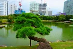 Kiefer, Hamarikyu-Gärten Bau von Gebäuden auf den Banken von Sumida-Fluss stockbild