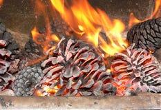 Kiefer im Feuer. Stockfotografie