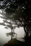 Kiefer im Regnen mit Nebel Lizenzfreie Stockfotos
