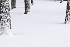 Kiefer im Schnee Stockbilder