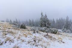 Kiefer im Schnee Lizenzfreie Stockfotos