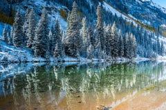 Kiefer im Schnee auf reflektierendem See Stockfotos