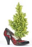 Kiefer im schottischen Schuh der Frau mit Fersenschwarzpatent Lizenzfreie Stockfotografie