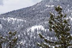 Kiefer im Vordergrund fügen Tiefe bewaldetem, schneebedecktem Bergabhang hinzu Stockfotografie