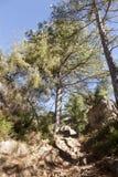 Kiefer in Los trägt den natürlichen Park Stockfotos