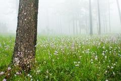 Kiefer mit Feld der Blume morgens Stockfotografie