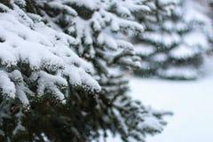 Kiefer mit Schnee Stockfotografie