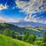 Kiefer nähern sich Tal in den Bergen auf Abhang unter Himmel mit Lizenzfreie Stockbilder