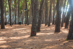 Kiefer parken auf Küste der Stadt Alba Adriatica in Italien, Naturhintergrund Lizenzfreie Stockbilder