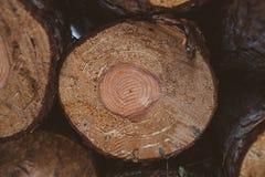 Kiefer protokolliert Hintergrund Holz- und Forstwirtschaft Baumstämme Beschaffenheit und Hintergrund für Designer Kiefer meldet W Stockbilder