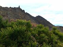 Kiefer ree und der Berg lizenzfreie stockfotos