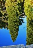 KIEFER-REFLEXION IM TEICH lizenzfreie stockfotos
