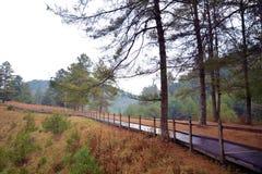 Kiefer und Blätter mit nassem Weg Stockfotografie