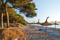 Kiefer und ein Sand setzen im Sonnenaufganglicht, in Mallorca, Spanien auf den Strand Stockbild
