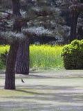 Kiefer und gelbe Blume Stockfoto