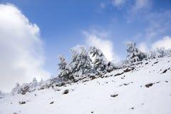 Kiefer und Schnee Lizenzfreies Stockfoto