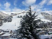 Kiefer voll des Schnees Stockbilder