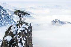 Kiefer von Huangshan-Berg Stockfotos