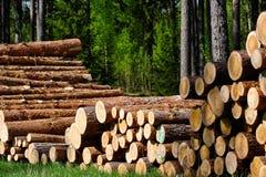 Kieferbauholz Stockbilder